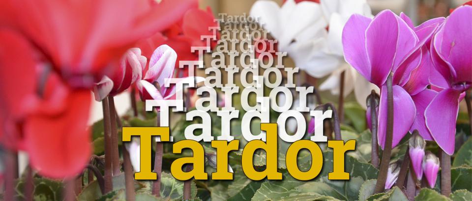 Banner Tardor CAT
