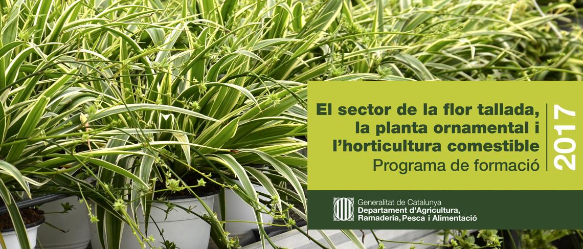 Programa de formació sector flor tallada i planta ornamental