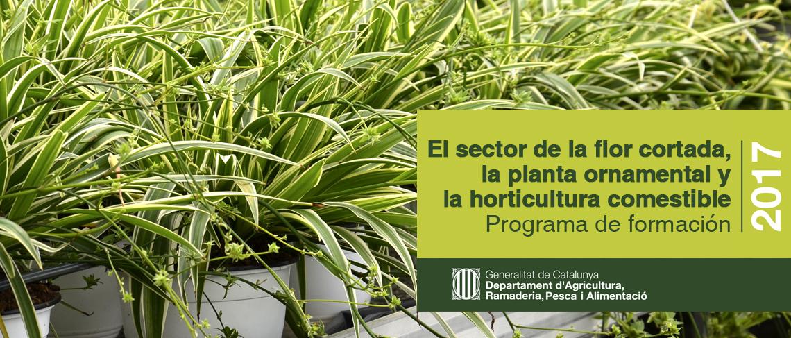 Programa de formación sector flor cortada y planta ornamental