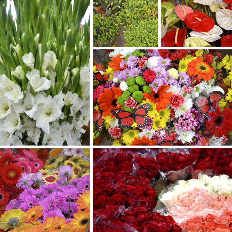 Resultat d'imatges de flors per tots sants