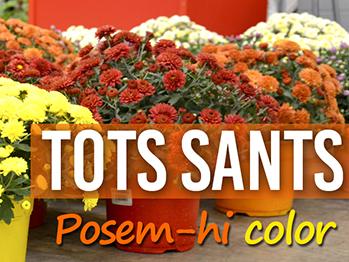 Resultat d'imatges de FLORS DE TOTS SANTS