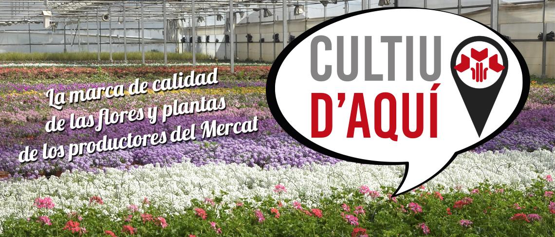 Cultiu d'Aquí - La marca de qualitat de les flors i plantes dels productors del Mercat