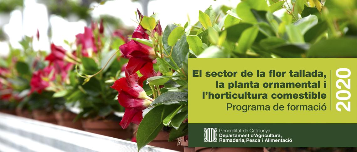 Programa de formació sectorial de la Generalitat de Catalunya